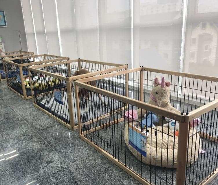 โรงพยาบาลสัตว์ทองหล่อ เชียงใหม่