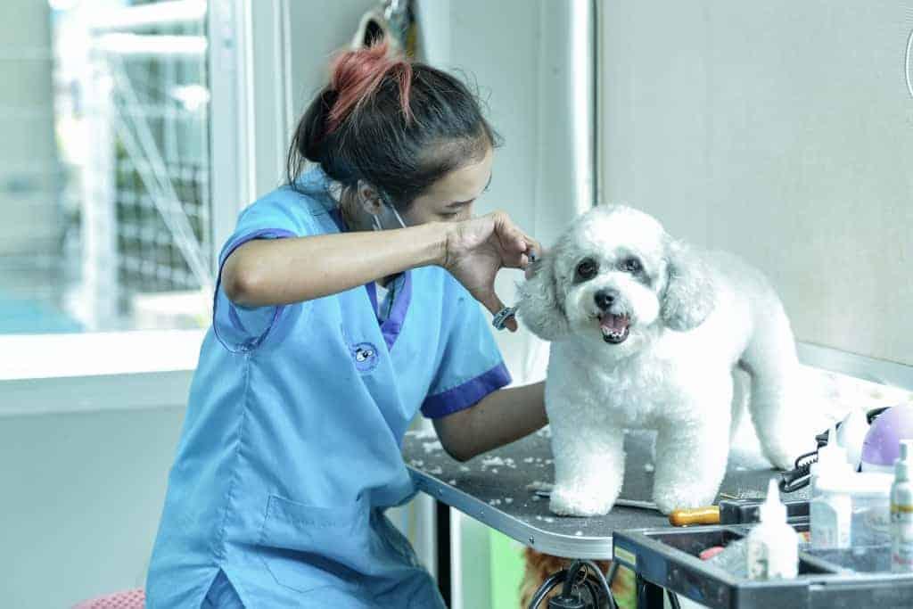 โรงพยาบาลสัตว์ทองหล่อ สาขาติวานนท์