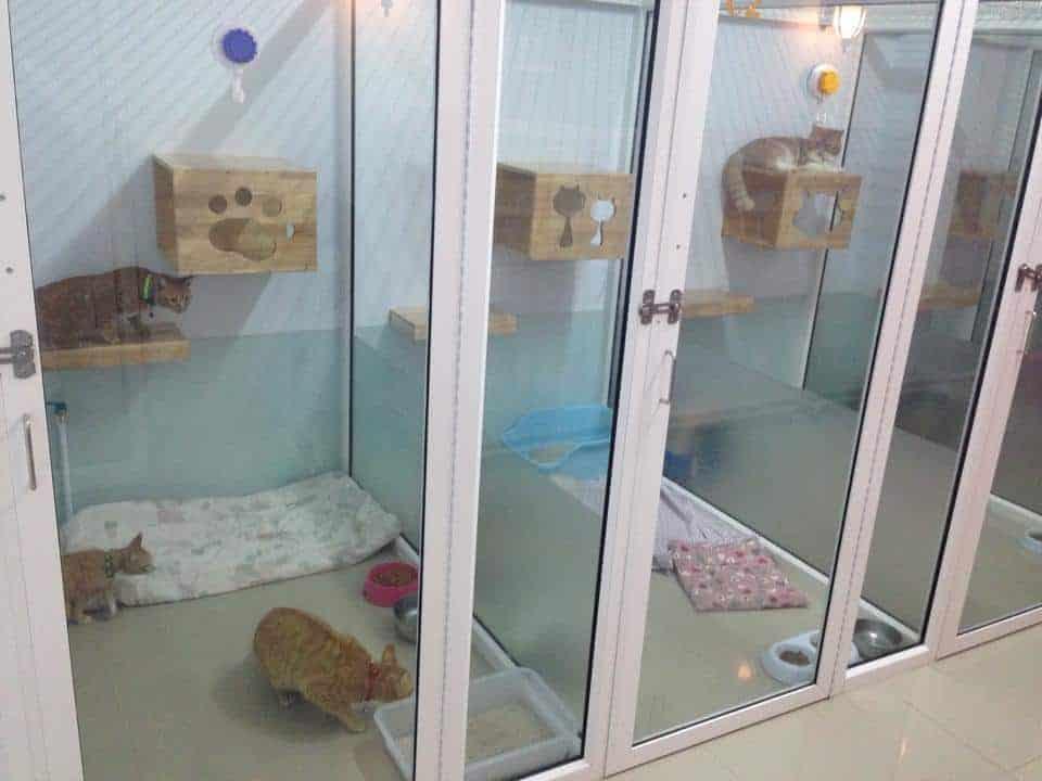โรงพยาบาลสัตว์เพ็ทโตะ