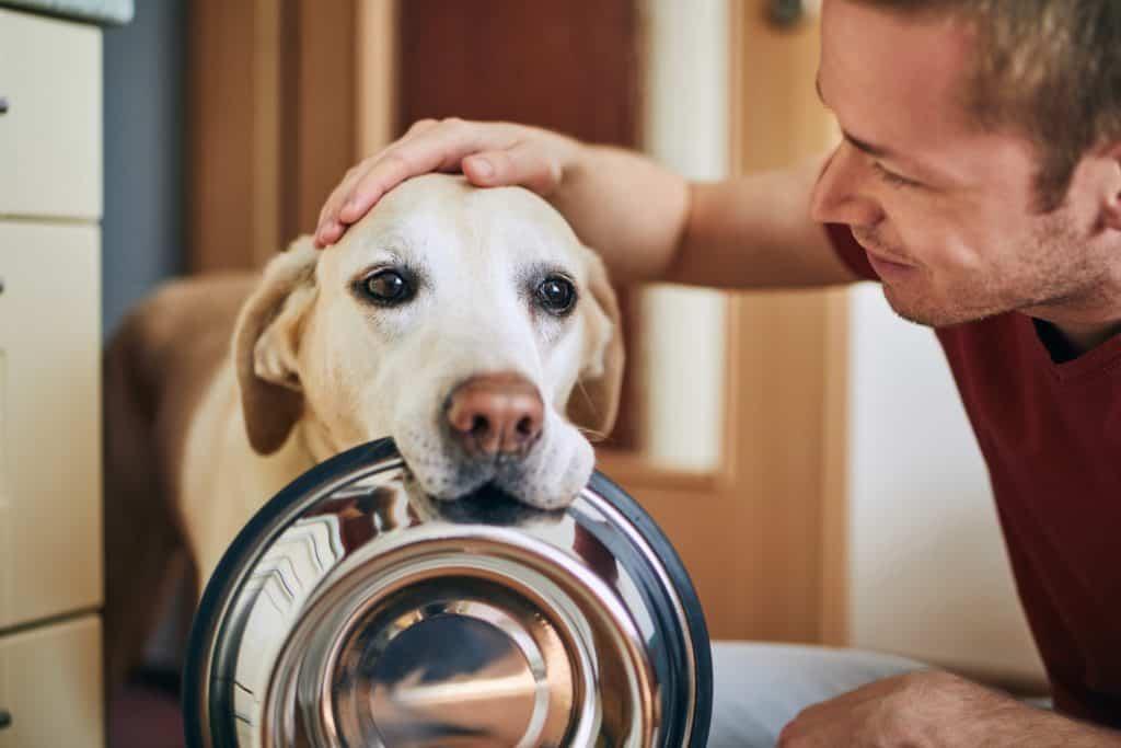 10 ไอเดียเลี้ยงสุนัขยังไงให้บ้านไม่เหม็น ไม่สกปรก? 1
