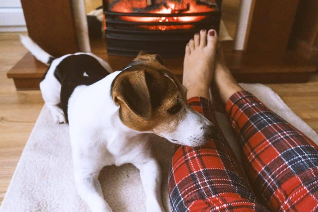 10 ไอเดียเลี้ยงสุนัขยังไงให้บ้านไม่เหม็น ไม่สกปรก? 5