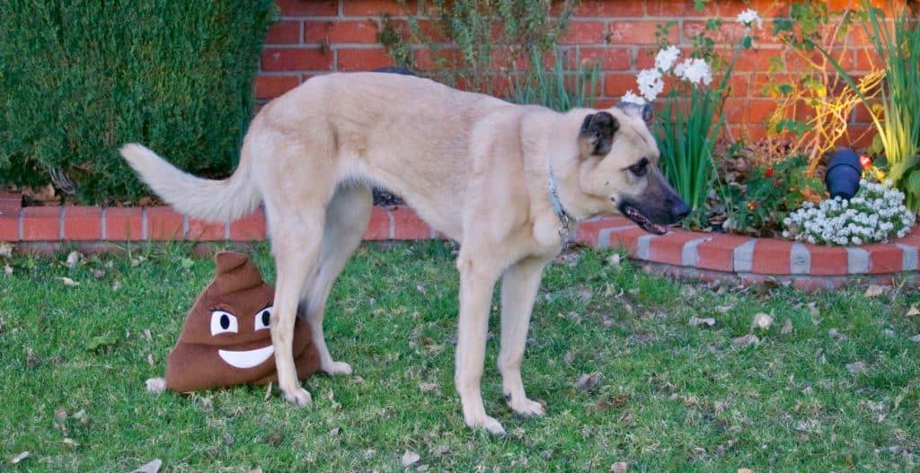 10 ไอเดียเลี้ยงสุนัขยังไงให้บ้านไม่เหม็น ไม่สกปรก? 4