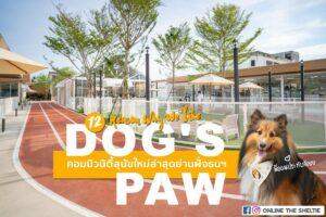 Pet Blog 4