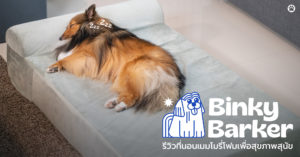 Pet Blog 3